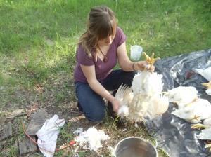 Потрошение курицы и подготовка к заморозке