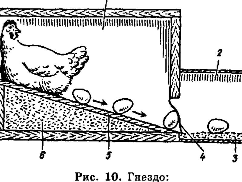 Размер насеста для кур несушек своими руками