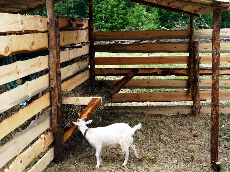 Сарай для баранов своими руками фото 43