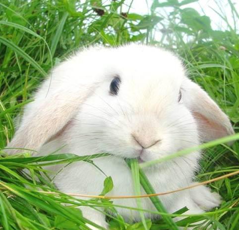 Клетки для карликового кроликов