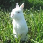 мини кролик