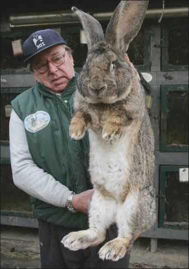 большой кролик