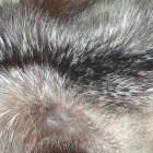 преимущества меха кролика