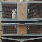 методы разведения кроликов