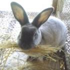 ошибки начинающих кролиководов