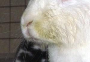 Содержание и уход за кроликами форум