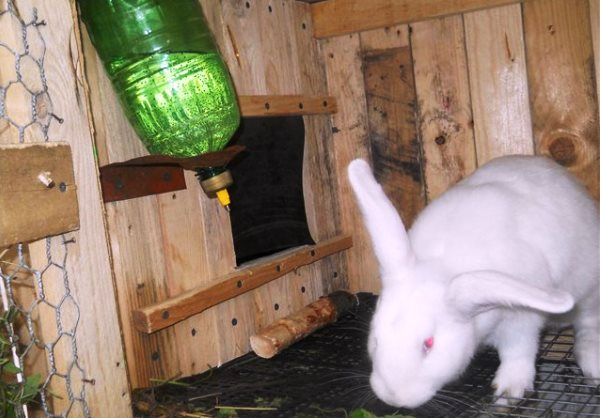 Поилки для кроликов своими руками фото оригинальные идеи