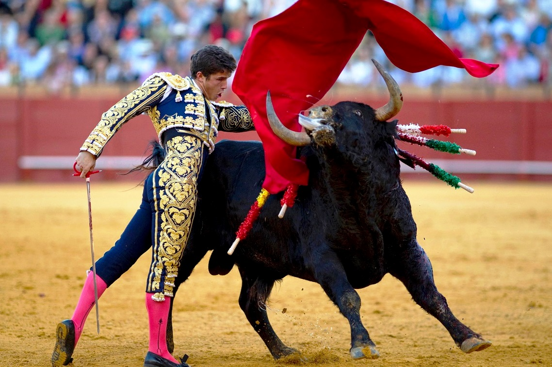 Sports News & Articles Scores, Pictures, Videos - ABC News Pictures of spanish fighting bulls