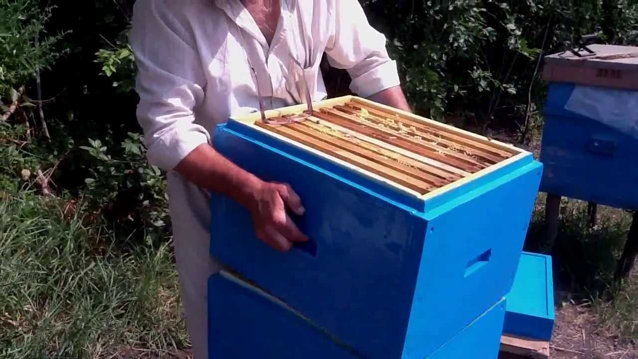 Ульи для пчел из пенополиуретана своими руками