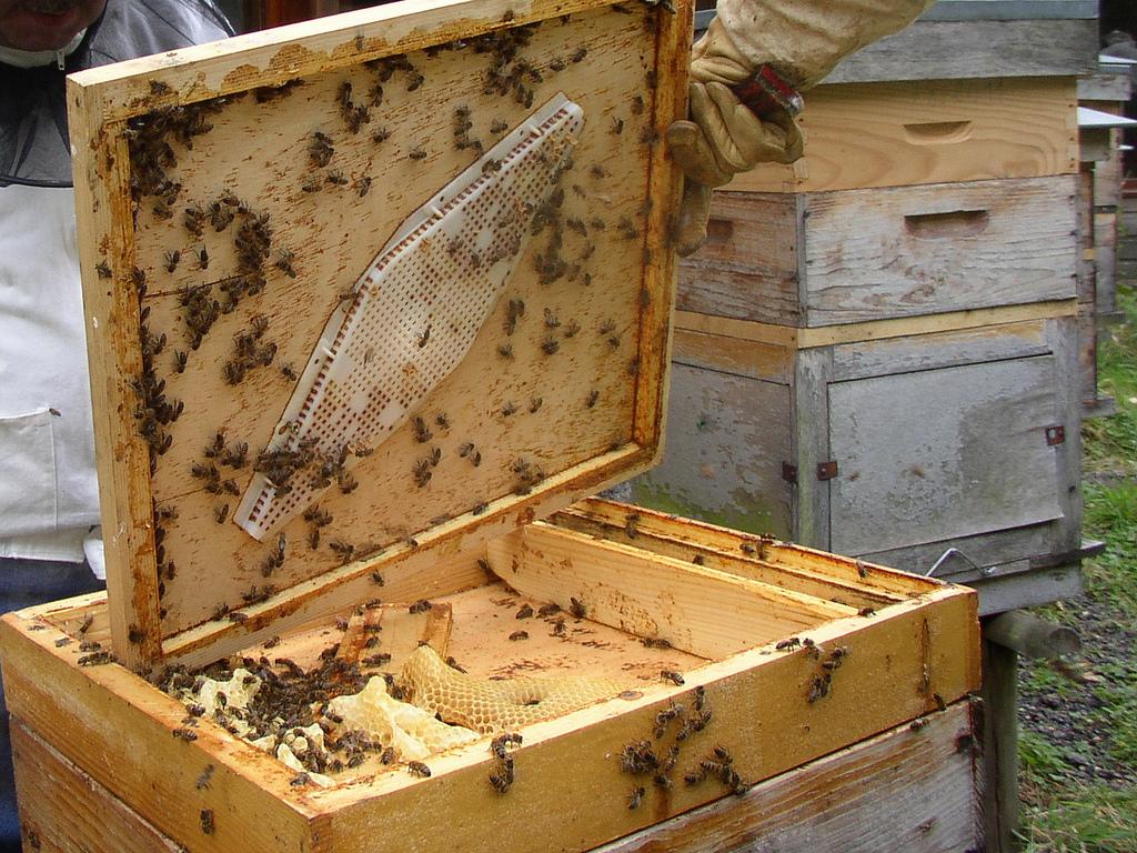 Приспособления для пчеловодства своими руками фото 69