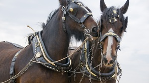 Основные виды упряжи для лошадей