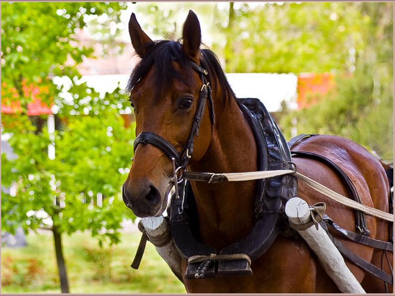 желаю вожжа лошадь картинка французской фотографии можно