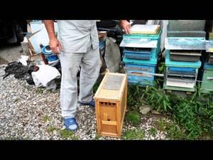 Пчеловодство с нуля