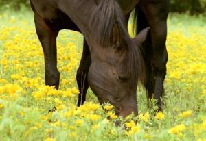 Продолжительность жизни лошади