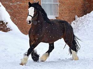 Характеристика породы лошади