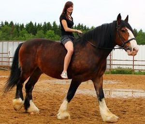 Порола лошади