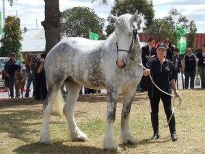 Серая лошадь в загоне
