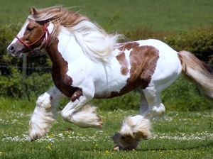 Лошади рекордсмены на прогулке