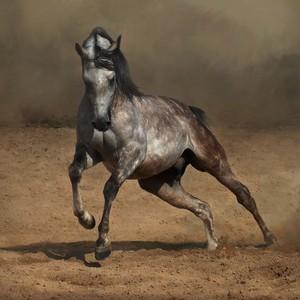 Какие самые красивые лошади