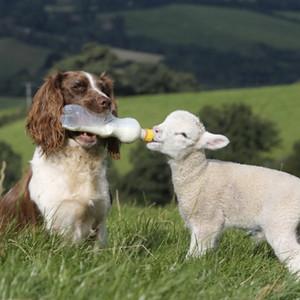 Собака и ягненок крупно