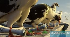 Олимпиада почтовых голубей