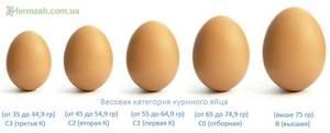 Как узнать вес яйца