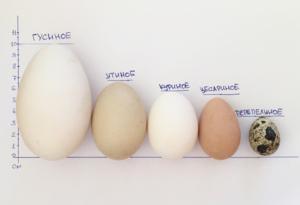 Как узнать вес куриного яйца