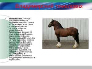 Описание пород лошадей тяжеловозов
