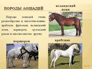 Породы лошадей в России