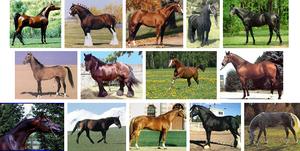 Название пород лошадей тяжеловозов