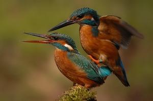 Размножение птиц на воле