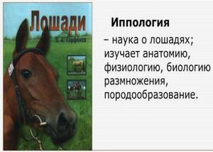 Польза и вред верховой езды на лошадях, видео уроки, экипировка