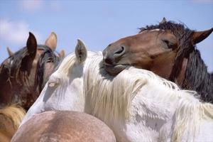 Спящие лошади