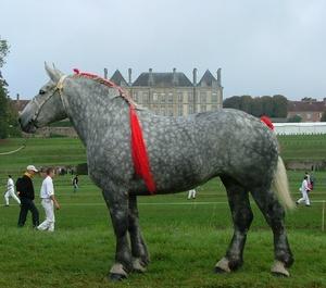 Конь першерон
