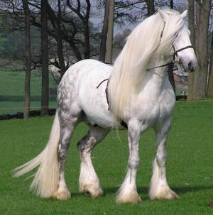 Конь породы першерон