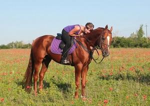 Описание характерных особенностей будённовской породы лошадей