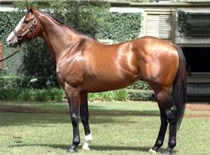 Какие лошади считаются самыми дорогими