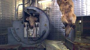 Забойщики скота