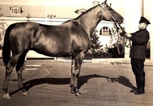 История происхождения лошадей донской породы