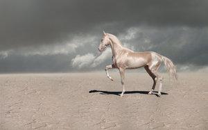 Красивая лошадь на природе