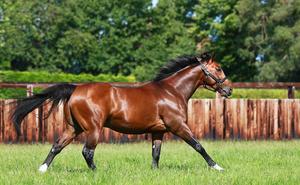 Френкел - порода лошадей