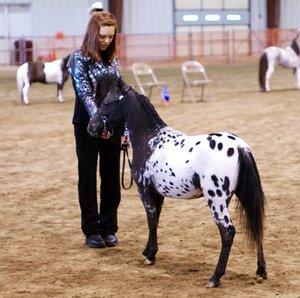 Фалабелла - порода лошадей