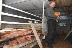 Руководство для строительства свинарника своими руками