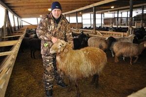 Из какого количества состоит семья овец
