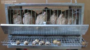 Птичьи клетки
