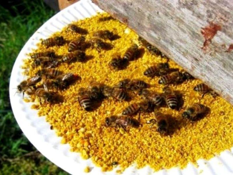 Помадка для подкормки пчел рецепт