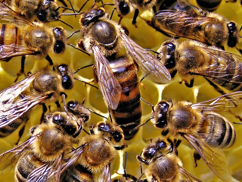 подкормка для пчел рецепт
