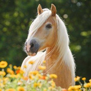 Лошадь в цветах фото