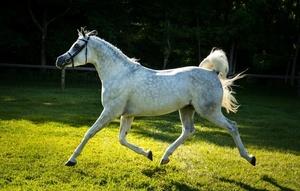 Рысь лошади фото