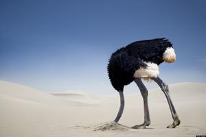 Сует ли страус голову в песок